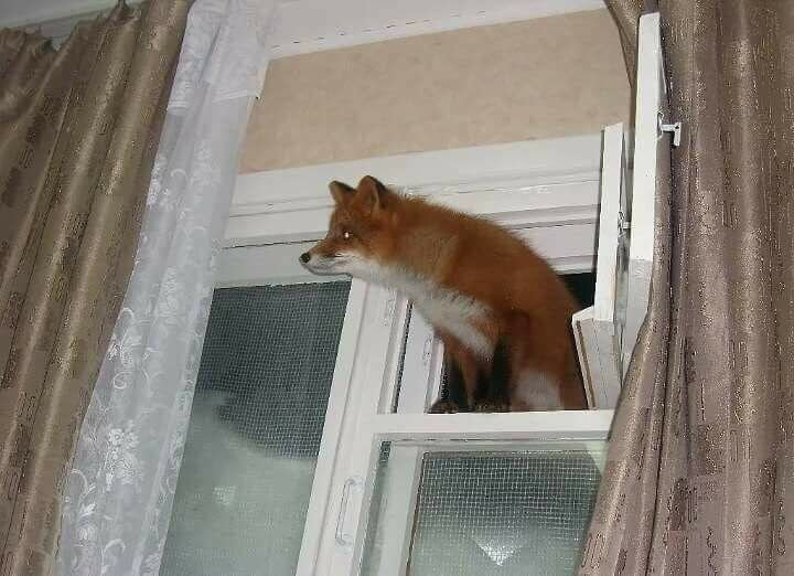 Download Firefox from Windows