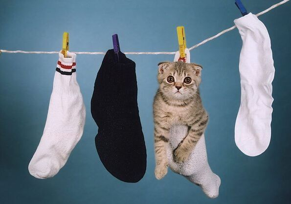 How to dry a cat